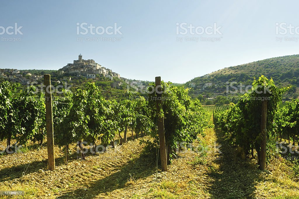 Vineyard On The Hills Of Abruzzo royalty-free stock photo