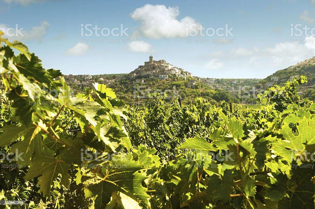 Winnica na wzgórzach Abruzzo – zdjęcie