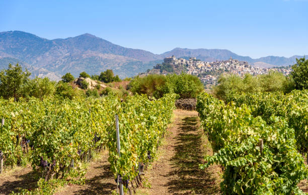 vineyard on the mount etna, sicily, italy Castiglione of sicily on background sicily stock pictures, royalty-free photos & images