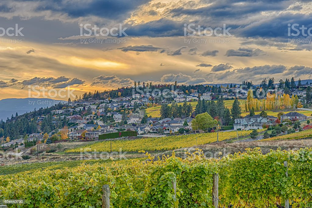 Vineyard Overlooking Okanagan Lake Kelowna BC Canada stock photo