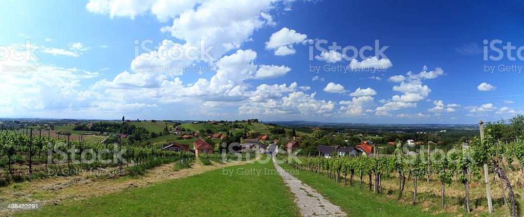 Vineyard, panorama royalty-free stock photo