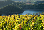 A vineyard sloping down toward a lake in wine country.