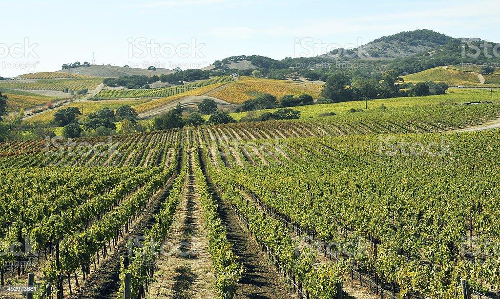 Vineyard - Photo
