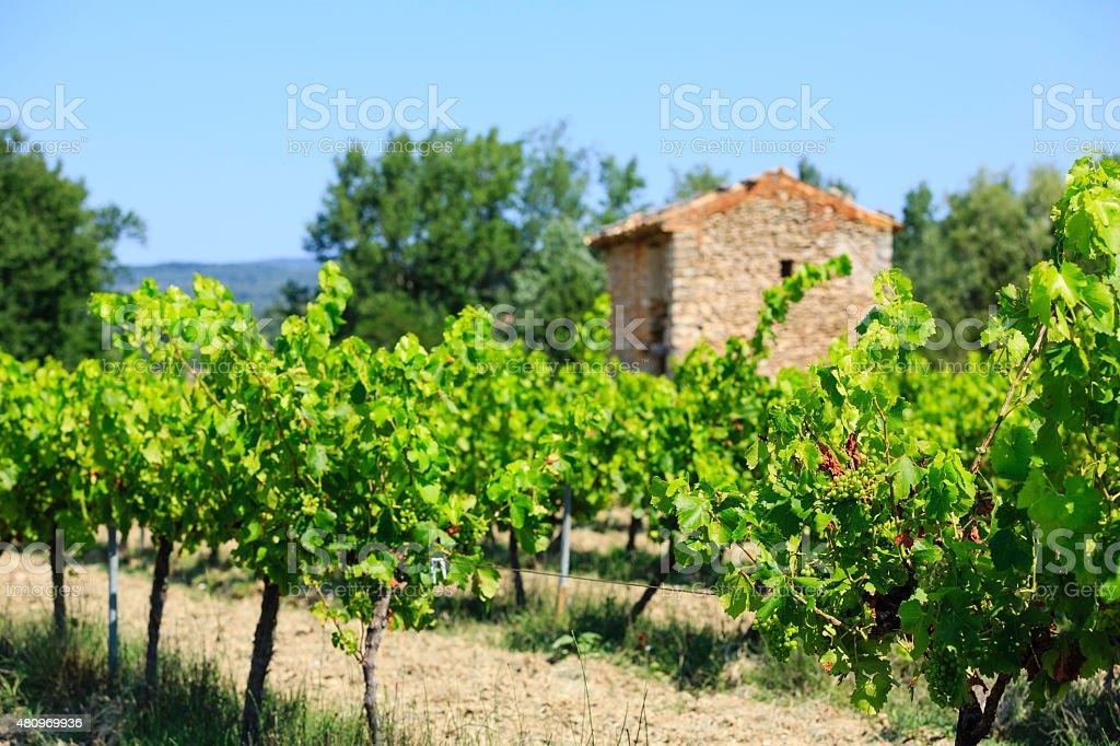 Winnica zbiór zdjęć royalty-free