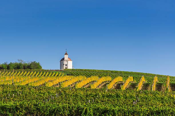 vineyard - hongrie photos et images de collection