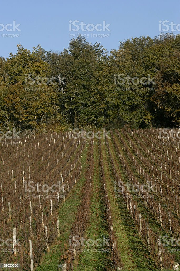 Vineyard 免版稅 stock photo