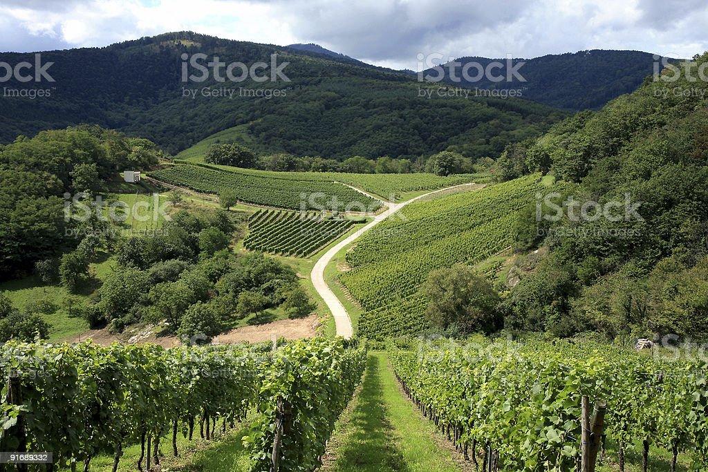 Azienda vinivola - foto stock