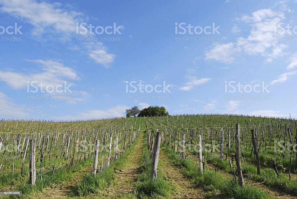 vineyard Lizenzfreies stock-foto