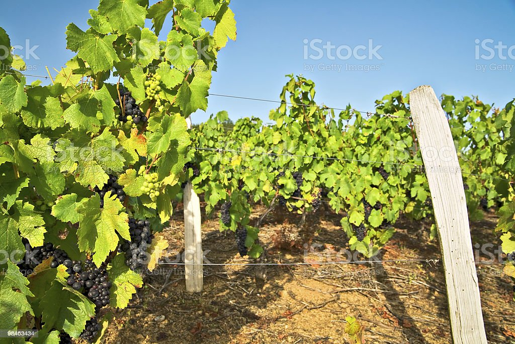 Azienda vinivola foto stock royalty-free