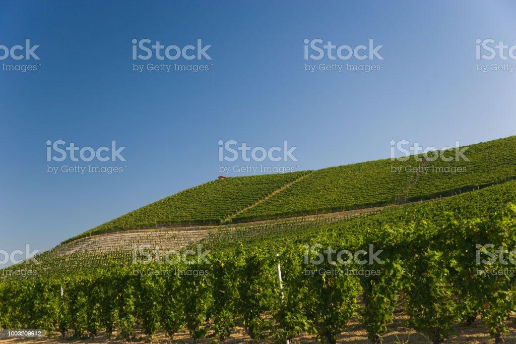 Vineyard, Piedmont, Italy - foto stock