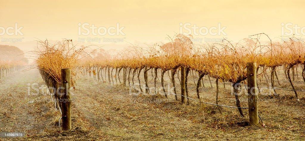 Vineyard Rain stock photo