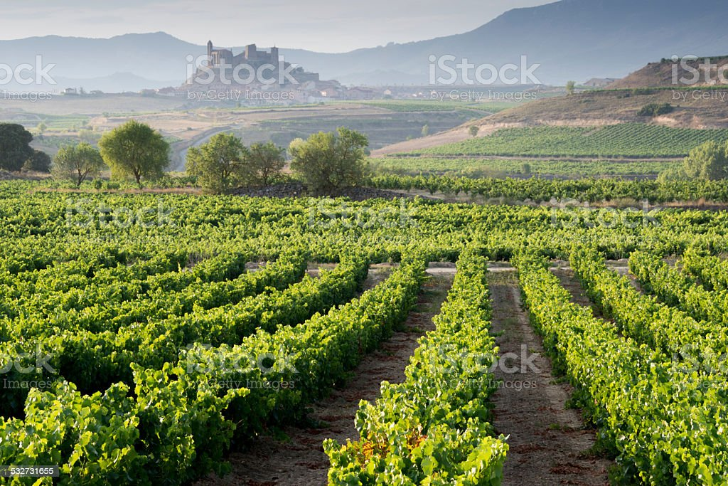 Vineyard, San Vicente de la Sonsierra as background, La Rioja stock photo