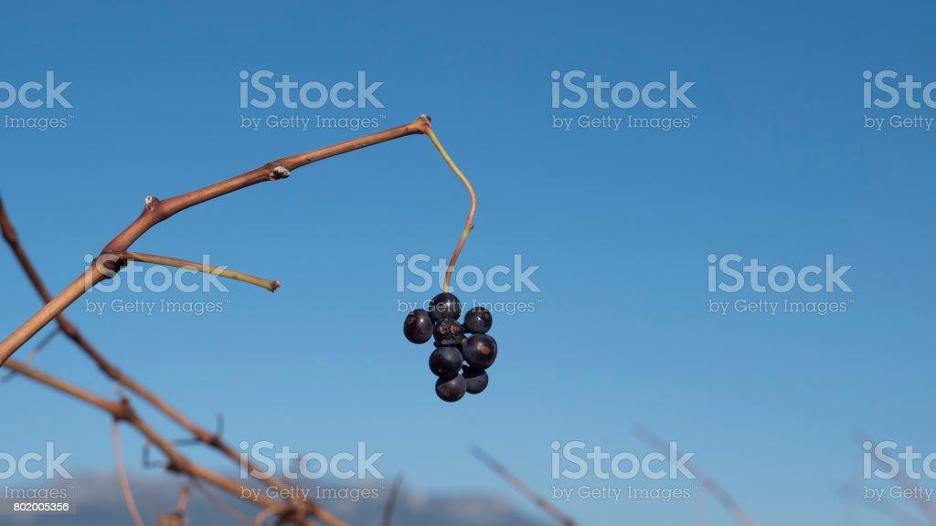 vineyard sited in la Rioja spain stock photo