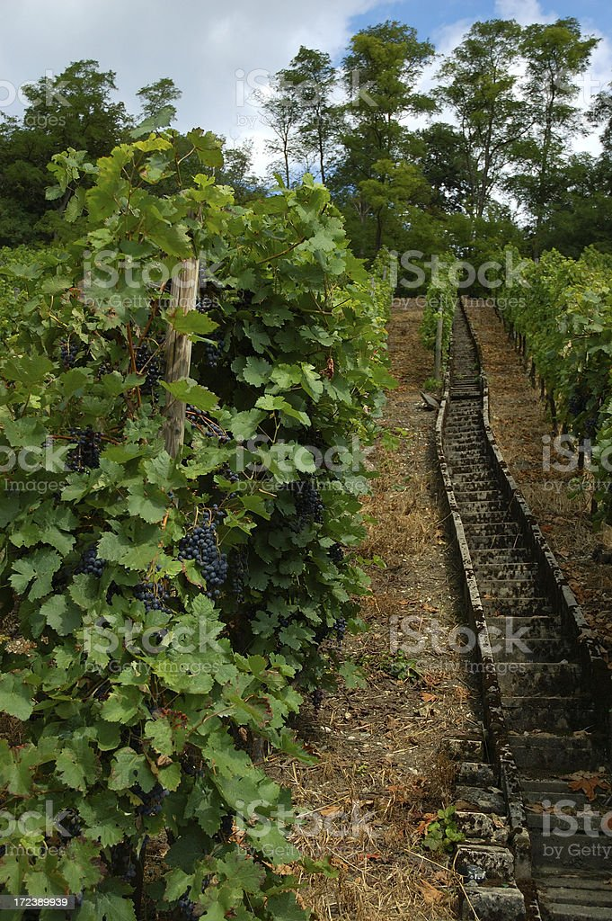 Vineyard Stairs royalty-free stock photo