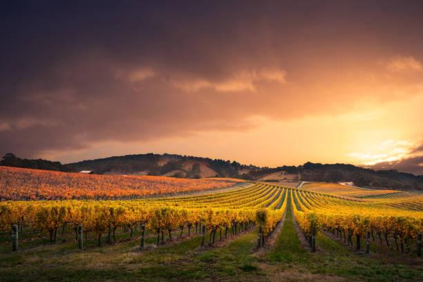Vineyard Stunner stock photo