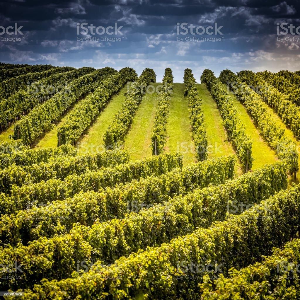Vignoble de bordeaux pour le lever du soleil vignoble france Europe - Photo