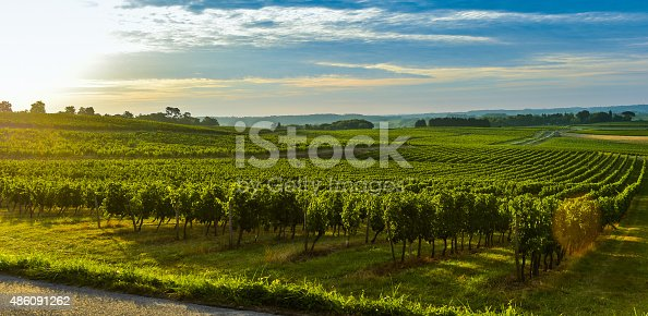 Vineyard Sunrise - Bordeaux Vineyard-France, Aquitaine, Gironde, 33, Targon.
