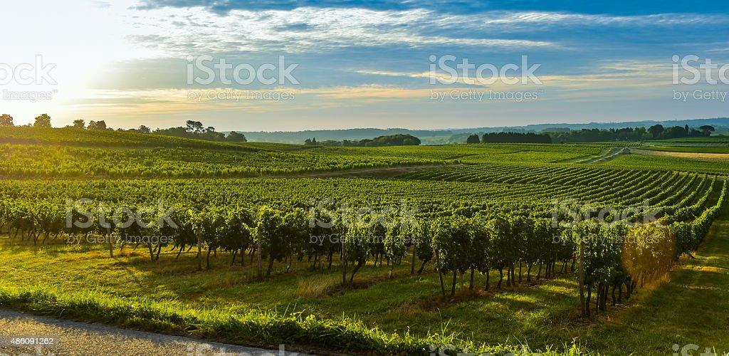 Lever du soleil du vignoble paysage de vignoble-Bordeaux - Photo
