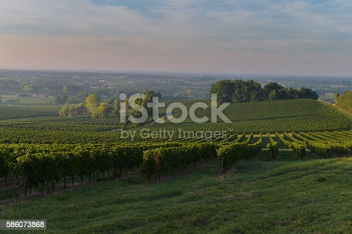 Vineyard Sunset Sunrise Bordeaux Vineyard France Europe