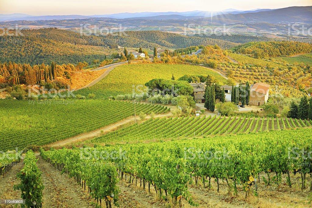 Vineyard sunset landscape from Tuscany stock photo