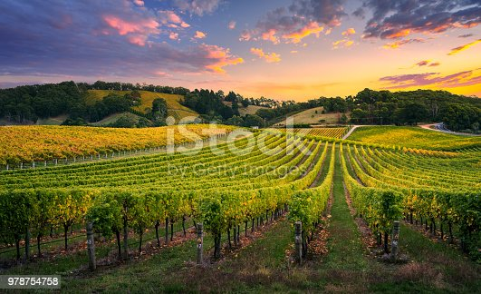 Beautiful Vineyard in the Adelaide Hills
