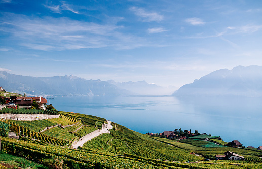 vineyard terrace in Chexbres village in Lavaux near Vevey and Montreux with lake Geneva view