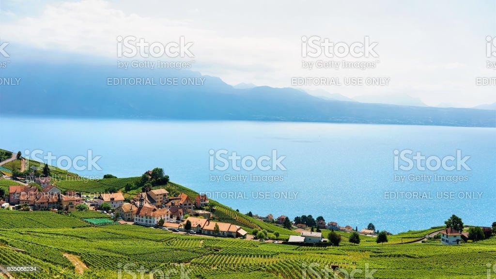 Photo Libre De Droit De Terrasse De Vignoble De Lavaux