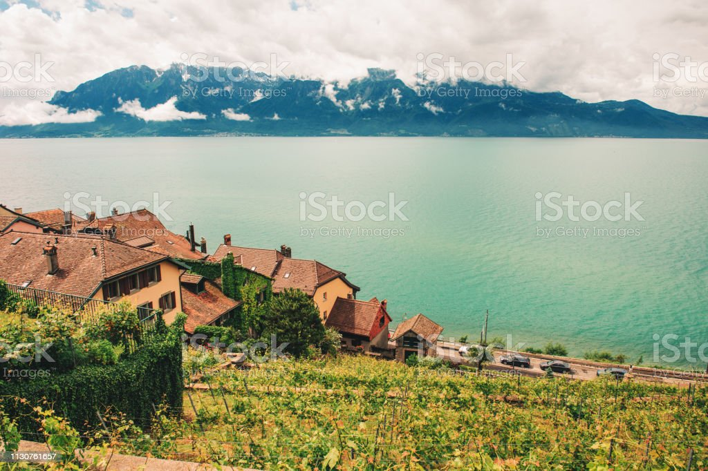 Photo Libre De Droit De Vignoble En Terrasses Au Lac Léman