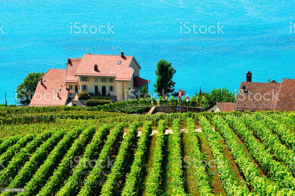 Photo Libre De Droit De Vignoble En Terrasses De Randonnée