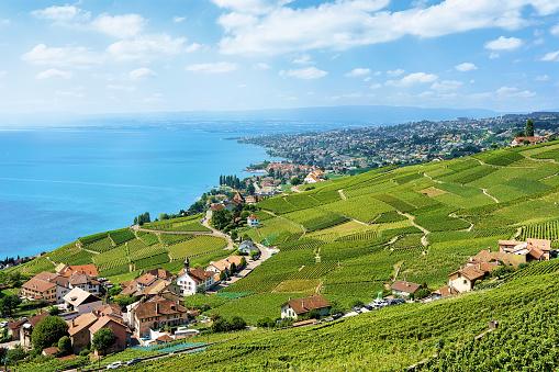 Vineyard Terraces of Switzerland Lavaux