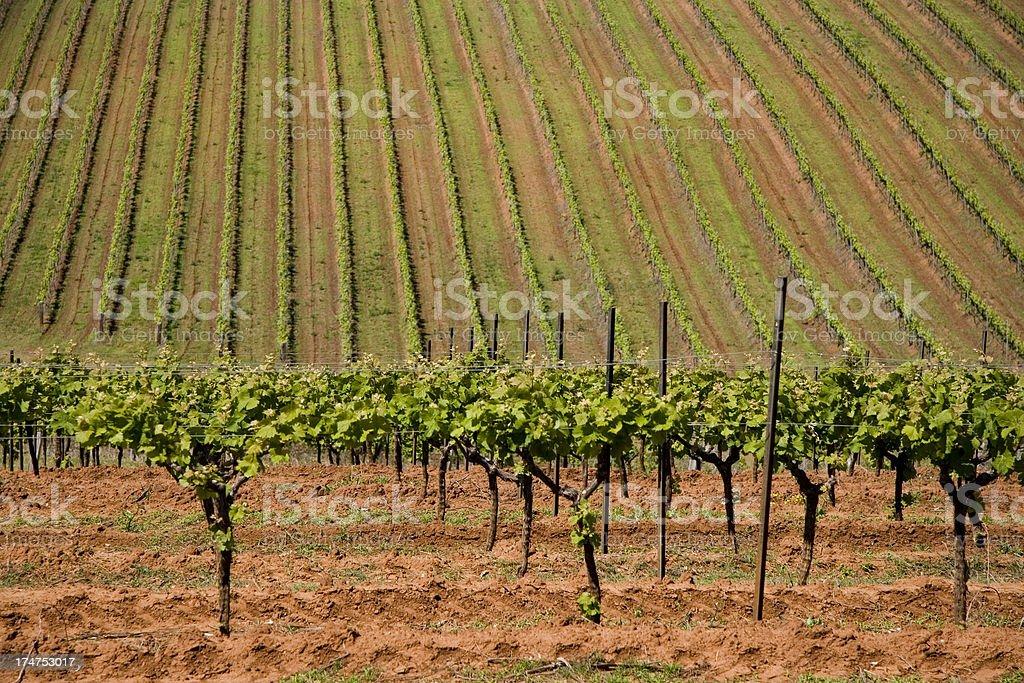 Vineyard valley stock photo