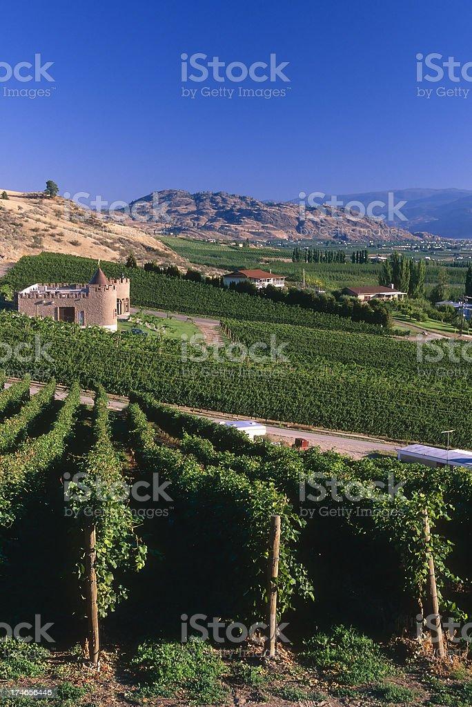 vineyard winery osoyoos okanagan valley agriculture royalty-free stock photo