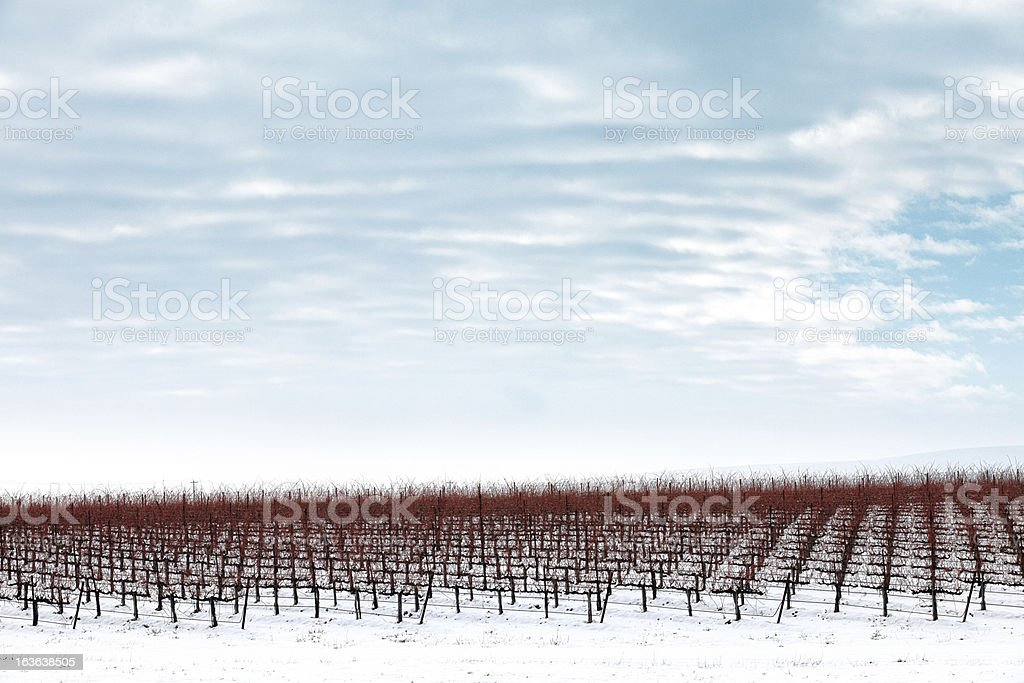 Vineyard & Winter Snow with Cloudy Sky Above stock photo