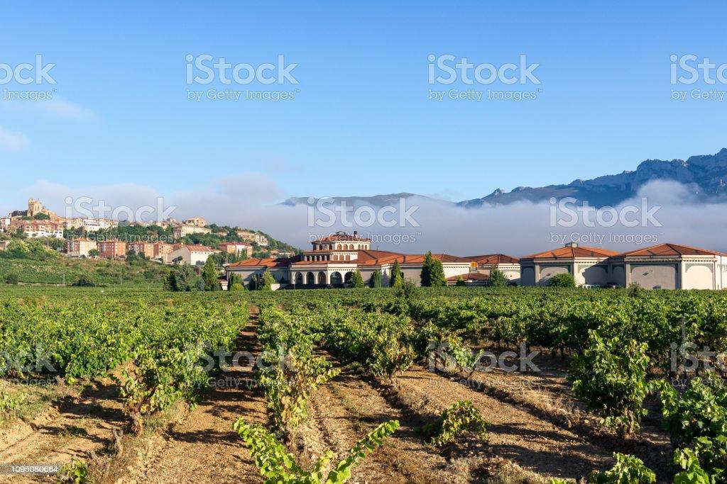 Vineyard with Laguardia town as background, Rioja Alavesa, Spain stock photo