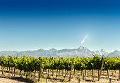 Vineyards and mountains.