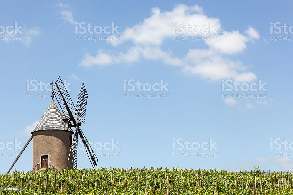 Vineyard with old windmill in Moulin a Vent in Beaujolais stock photo
