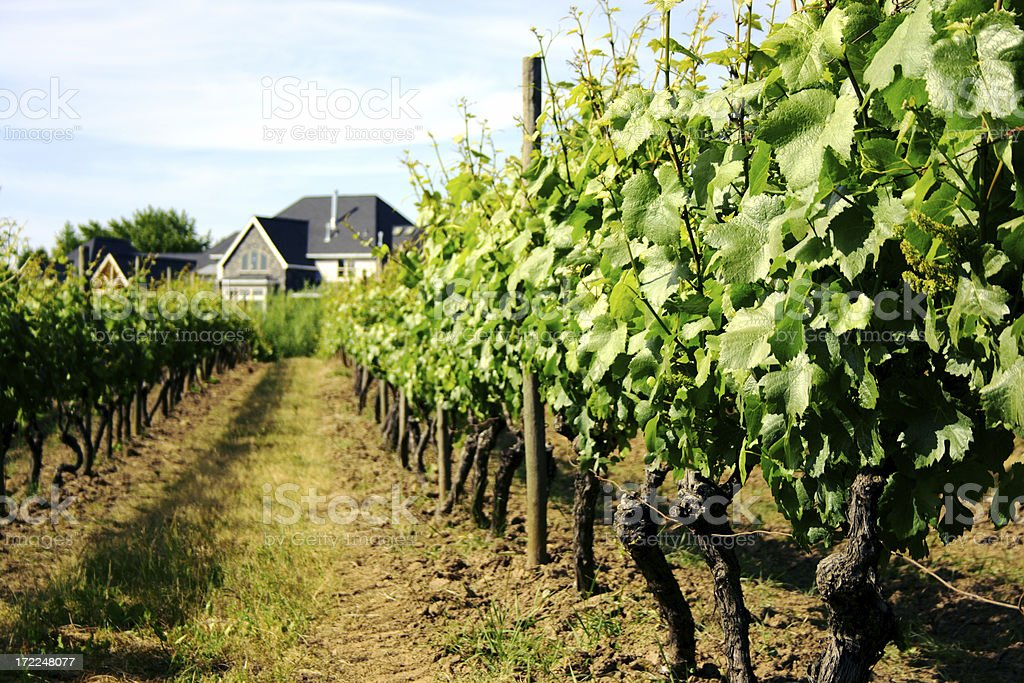 Vineyard with tasting cottage royalty-free stock photo