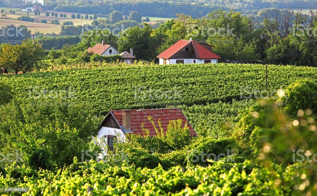 葡萄園與酒壓房 - 免版稅傳統圖庫照片