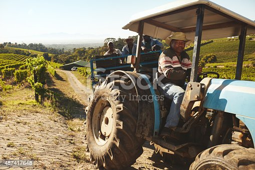 171320236 istock photo Vineyard worker transporting grapes to wine factory 487417648
