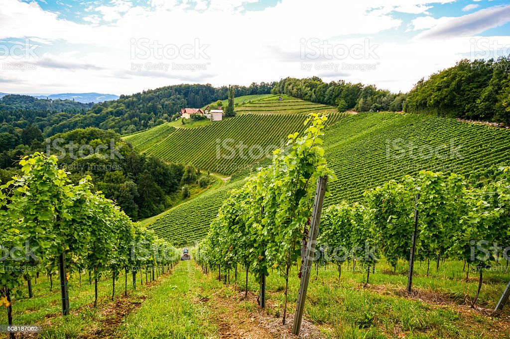 Vineyards along South Styrian Wine Road in autumn, Austria Europe stock photo