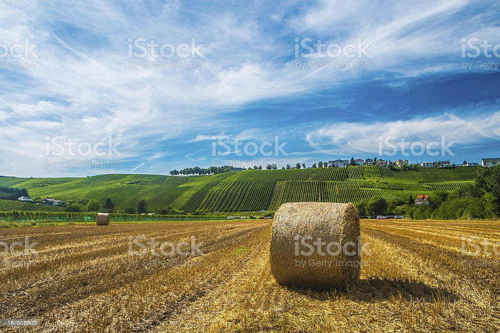 Vineyards along the Moselle river, Luxembourg stock photo