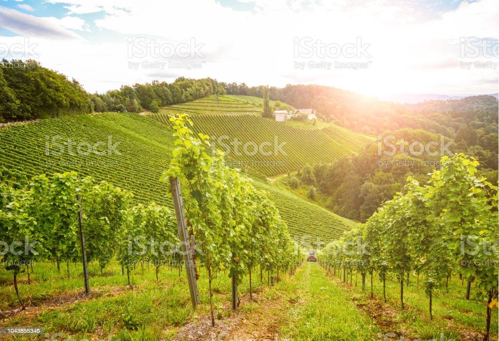 Weinberge an der South steirische Weinstraße im Herbst, Österreich Europa – Foto