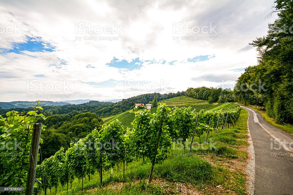 Vineyards along the South Styrian Wine Road in autumn, Austria stock photo