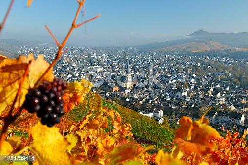 Autumnally coloured vines in the Ahr Valley (Ahrtal) near Ahrweiler