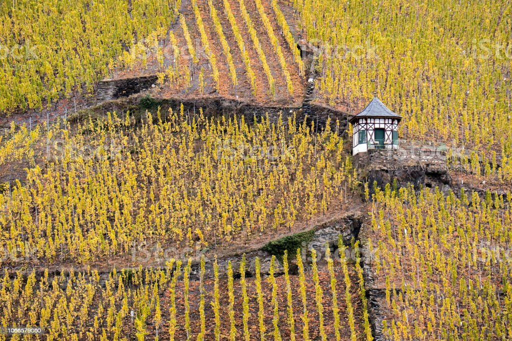 Vineyards and an old shed in Bernkastel-Kues in the Mosel Valley, Germany royalty-free stock photo