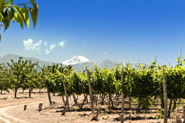 Vineyards and cherry trees, Tupungato, Mendoza, Argentina. stock photo