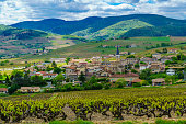 Landscape of vineyards and countryside in Beaujolais, with the village Lantignie. Rhone department, France