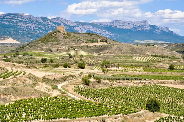 Vineyards and Davalillo castle, La Rioja (Spain) stock photo