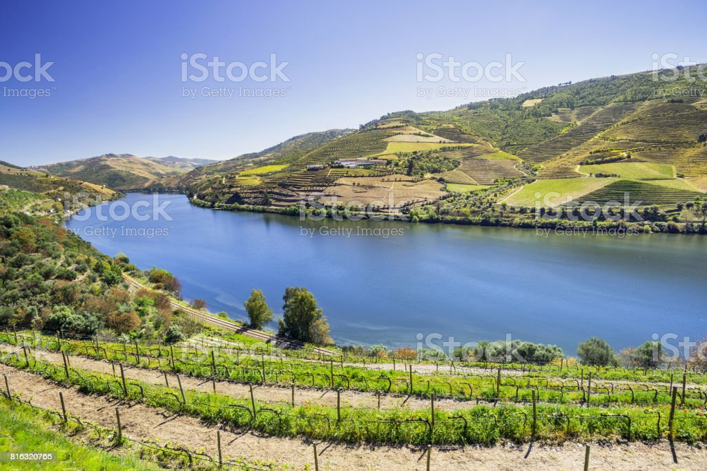 Vineyards and Douro river, Portugal stock photo