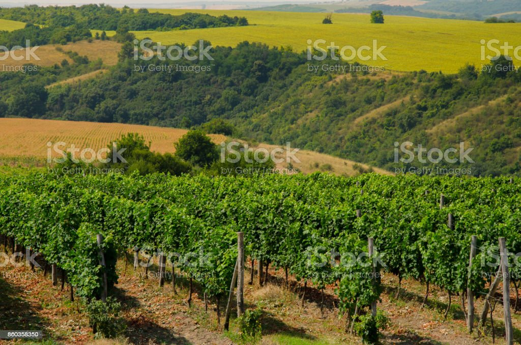 Vineyards and fields of crop, Bulgaria stock photo